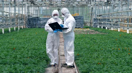 herbicides : Two chemists are among the plants with a laptop
