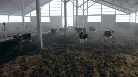 навес : Herd of cows in a big byre, close up.