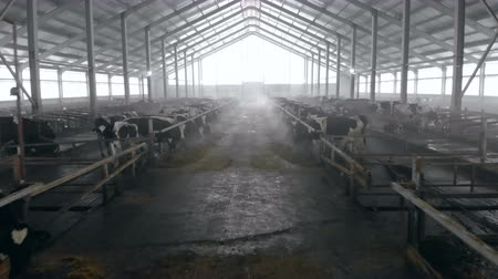 beef stock : A big cowshed with cows, close up.