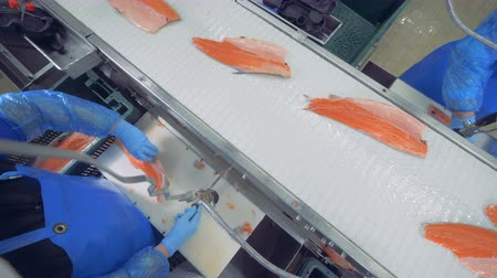sorteren : Plant workers utting off fins on a fish fillet, top view. Stockvideo