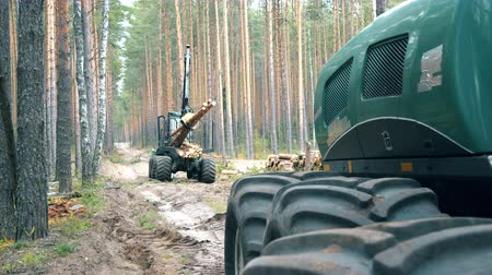 грузовики : Forest harvester is relocating felled timber