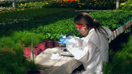pesticidi : Female botanist works with a microscope in a glasshouse. Filmati Stock
