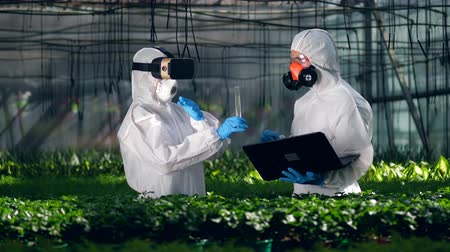 use computer : Two biologists work in a greenhouse, using VR glasses and laptop.
