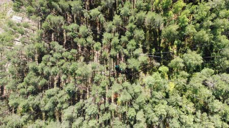timber cutting : View from above of trees harvesting site Stock Footage