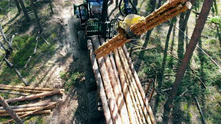 cutting open : Harvester is stacking processed trunks of trees