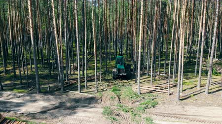 cutting open : Mechanical harvester is felling trees in a top view Stock Footage