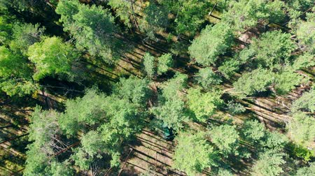 cutting open : View from above of a green pine forest getting harvested Stock Footage