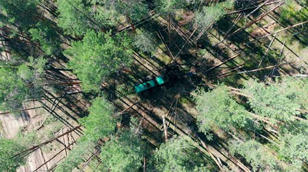 felling : View from above of the trees getting cut by the machine