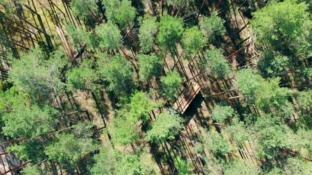 лесозаготовки : Top view of the pine forest with a mechanical harvester working in it Стоковые видеозаписи