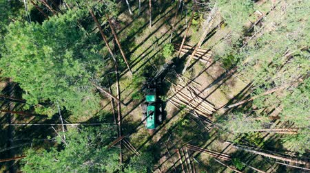 felling : Industrial machine is chopping pines in a top view