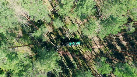 лесозаготовки : Top view of the harvester felling timber