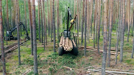 mechanically : Pine trunks are getting mechanically processed and stacked