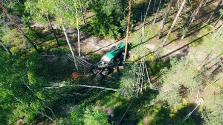 conversie : Top view of the industrial vehicle chopping felled pines