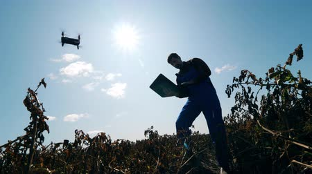 agronomist : One man works with a drone on a field with crops. Stock Footage