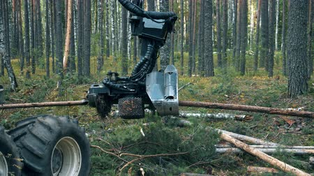 лесозаготовки : Working tractor cuts trees in woods. Стоковые видеозаписи