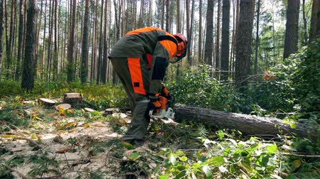 scie à chaine : Working lumberjack uses chainsaw to cut tree.