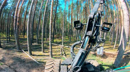 лесное хозяйство : A machine works with tree trunks in forest.
