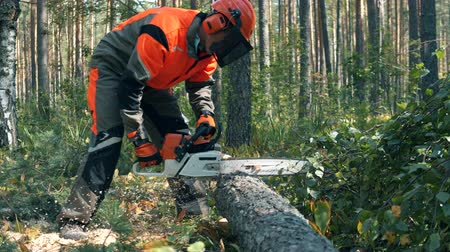 zaagsel : Lumberjack chops trees with chainsaw.