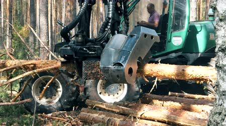 scierie : Tractor cuts trunks in pieces while working in forest.