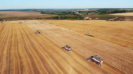 monoculture : Top view of a rye field with mechanical harvesters Stock Footage