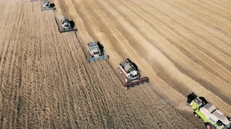 reaping : Many combine machines are reaping wheat in a top view