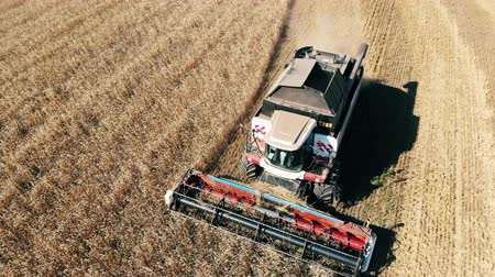 mechanically : Industrial combines are harvesting grain crops Stock Footage