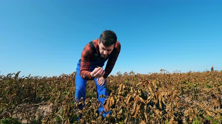 agronomist : Male cultivator is disappointed with faded plants Stock Footage