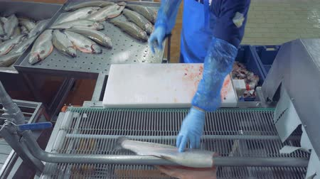 onto : Factory specialist is chopping heads of fish and putting it onto the belt Stock Footage