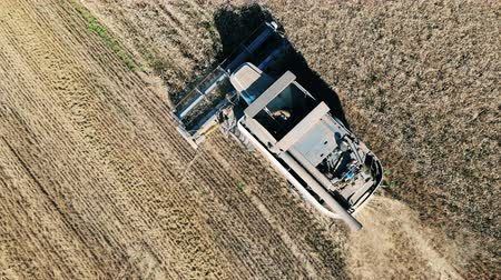 reaping : Top view of the combine reaping rye Stock Footage