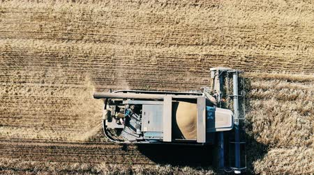 reaping : Top view of the combine harvesting and processing wheat