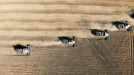 monoculture : Top view of the harvesters reaping rye in rows