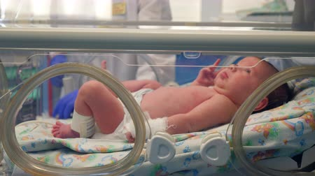 neonatology : Baby lying in infant incubator in a hospital room. Stock Footage