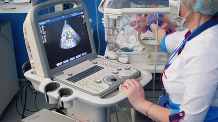 incubator : Female doctor uses ultrasound machine to check a newborns heart.