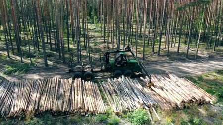 silvicultura : Environmental problem deforestation, logging. A machine works with stacks of trunks in forest.