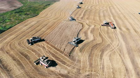 reaping : Combines are moving along the field and reaping wheat