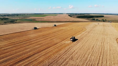reaping : Grain crops field with harvesting machines in the working process Stock Footage