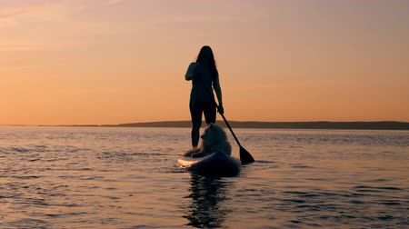 sucção : A lady with a dog is doing SUP in sunset waters