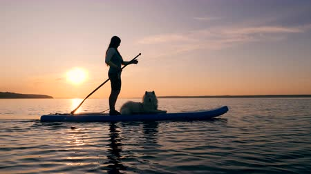 sup : SUP of a woman with a dog at sunset