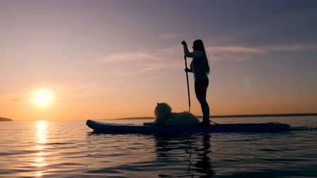sucção : Sunset lake with a lady and a dog doing stand-up paddleboarding