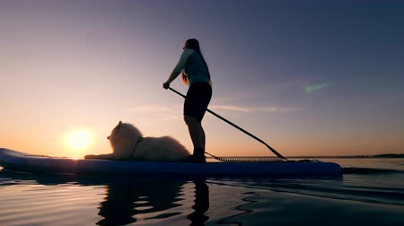 kürek çekme : Stand-up paddleboarding of a young woman and her dog Stok Video