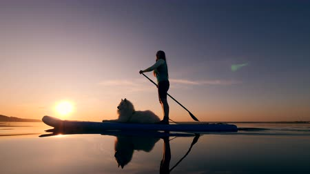 sucção : Stand-up paddlesurfing of a lady and a dog at sunset Stock Footage
