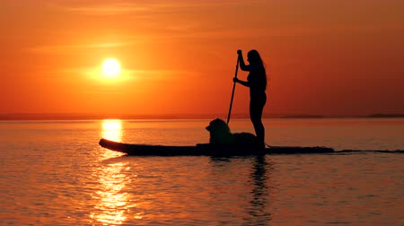 sucção : Side view of a woman and her dog doing SUP at sunset Stock Footage