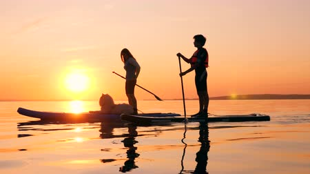 sucção : A boy and a son with a dog are doing SUP at sunset