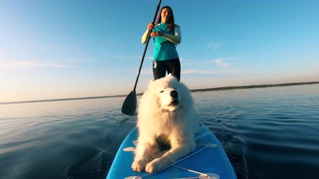 sucção : A dog is barking while paddleboarding with a young woman Stock Footage