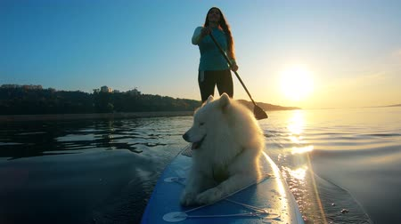 tutmak : Smiling lady is doing SUP with her dog in a front view