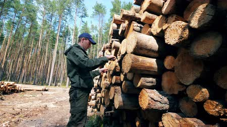лесозаготовки : Wood measuring carried out by the lumberman