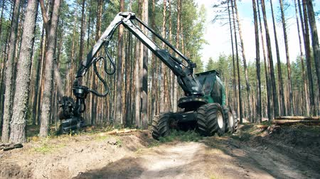 scierie : Tractor is harvesting pines and sawing them. Deforestation, forest cutting concept.