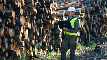 лесное хозяйство : A man in safety wear is observing wood with a laptop