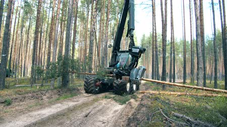 лесозаготовки : Mechanical harvester is chopping a tree. Deforestation, forest cutting concept.