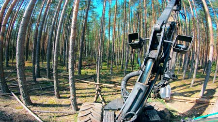изделия из дерева : Cutting of trees carried out with the harvester